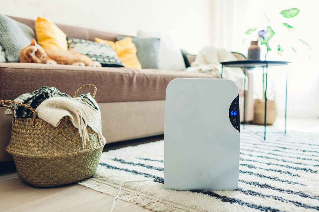 5 Best Small Dehumidifiers to Safeguard Your Home from Humidity